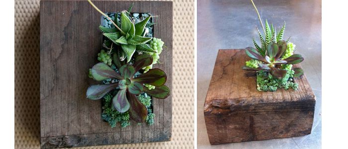 make your terrarium a success