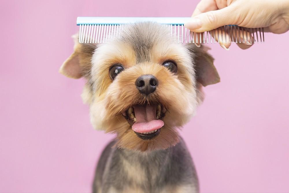 mobile pet grooming miami